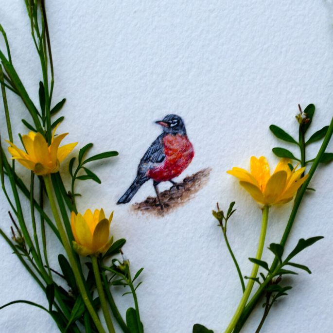 Watercolor Miniature of Robin