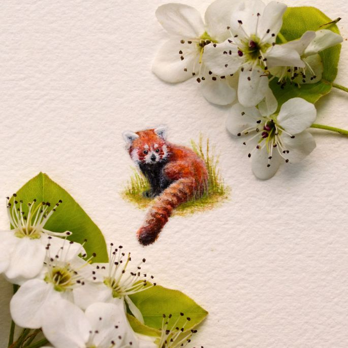 Watercolor Miniature of Red Panda